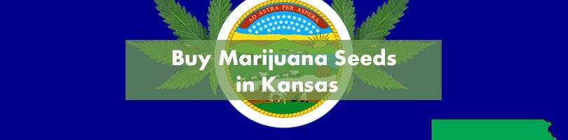 Buy Marijuana Seeds in Kansas Featured Image