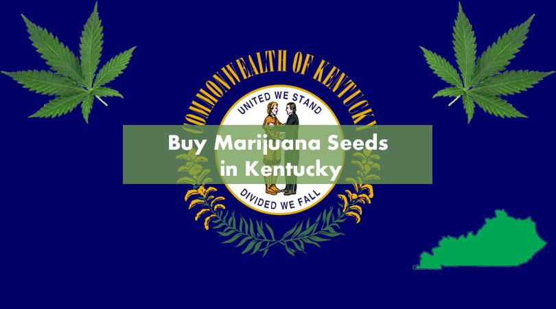 Buy Marijuana Seeds in Kentucky Cover Photo