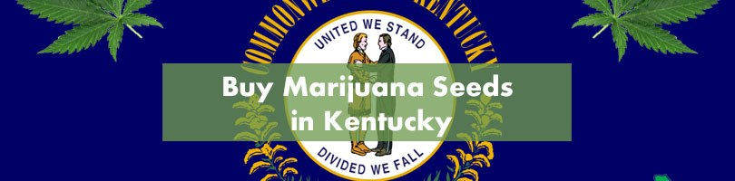 Buy Marijuana Seeds in Kentucky Featured Image