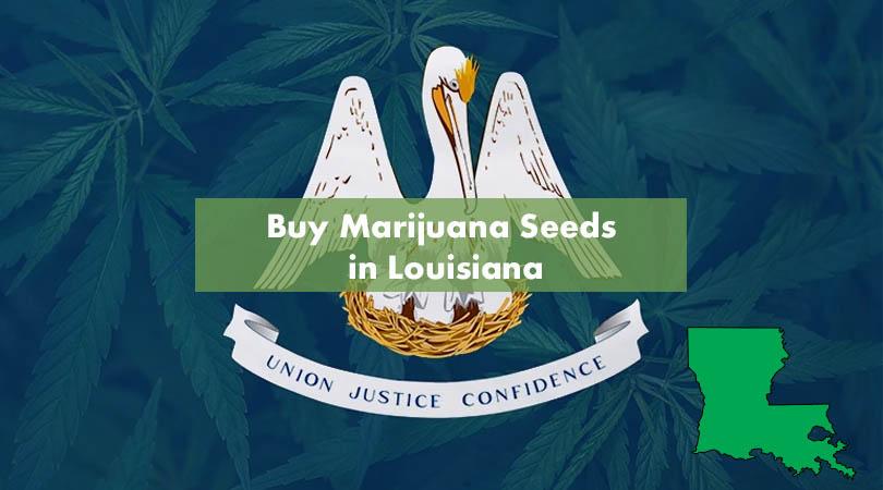 Buy Marijuana Seeds in Louisiana Cover Photo