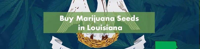 Buy Marijuana Seeds in Louisiana Featured Image