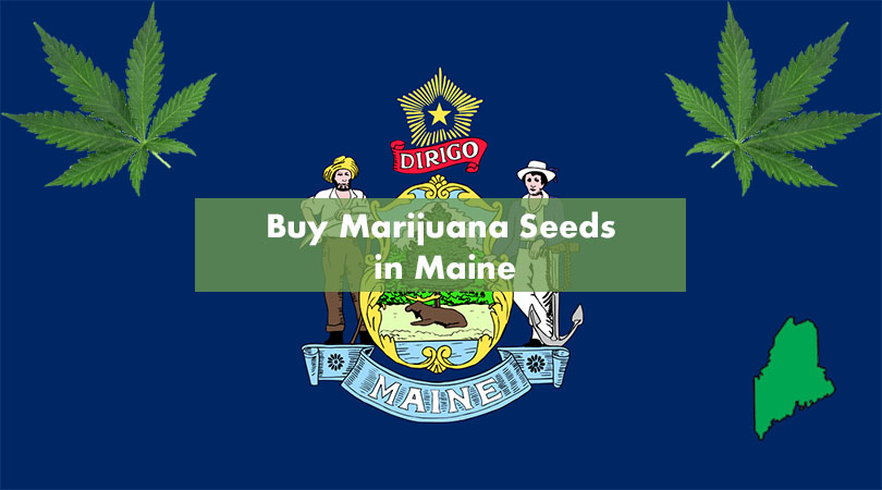 Buy Marijuana Seeds in Maine Cover Photo