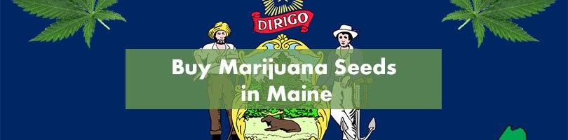 Buy Marijuana Seeds in Maine Featured Image
