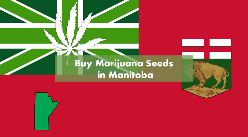 Buy Marijuana Seeds in Manitoba Cover Photo