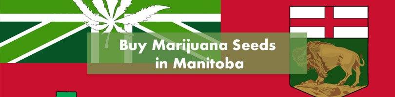 Buy Marijuana Seeds in Manitoba Featured Image