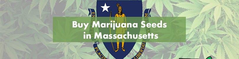 Buy Marijuana Seeds in Massachusetts Featured Image