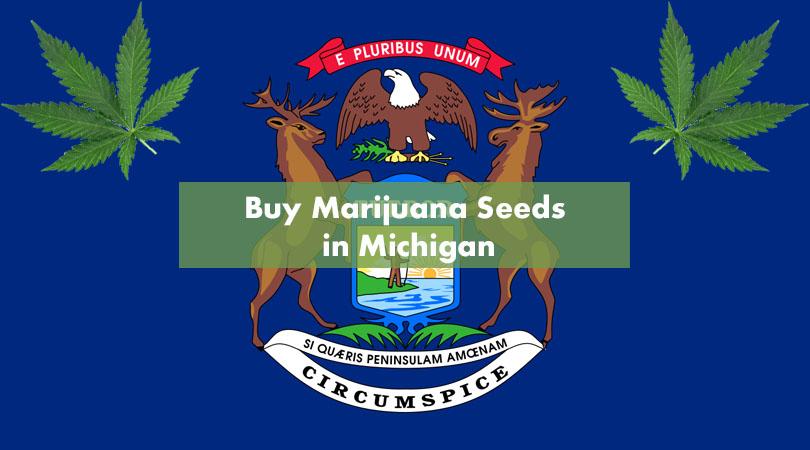 Buy Marijuana Seeds in Michigan Cover Photo