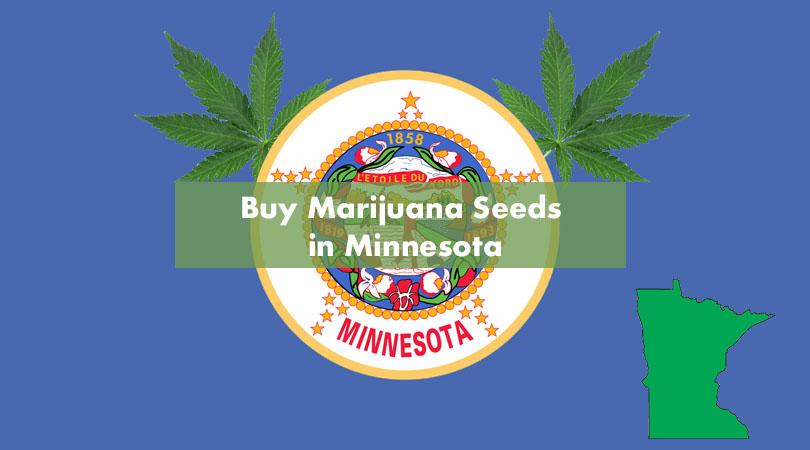 Buy Marijuana Seeds in Minnesota Cover Photo