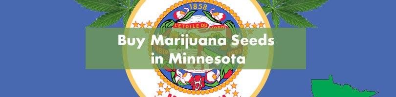 Buy Marijuana Seeds in Minnesota Featured Image