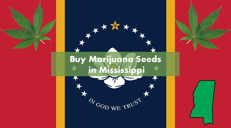 Buy Marijuana Seeds in Mississippi Cover Photo