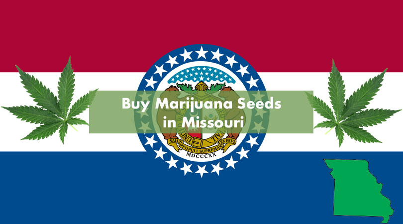 Buy Marijuana Seeds in Missouri Cover Photo