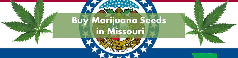 Buy Marijuana Seeds in Missouri Featured Image