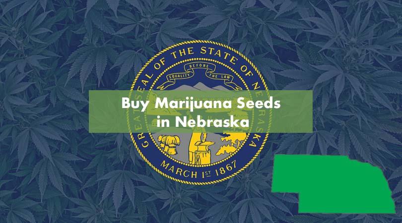 Buy Marijuana Seeds in Nebraska Cover Photo
