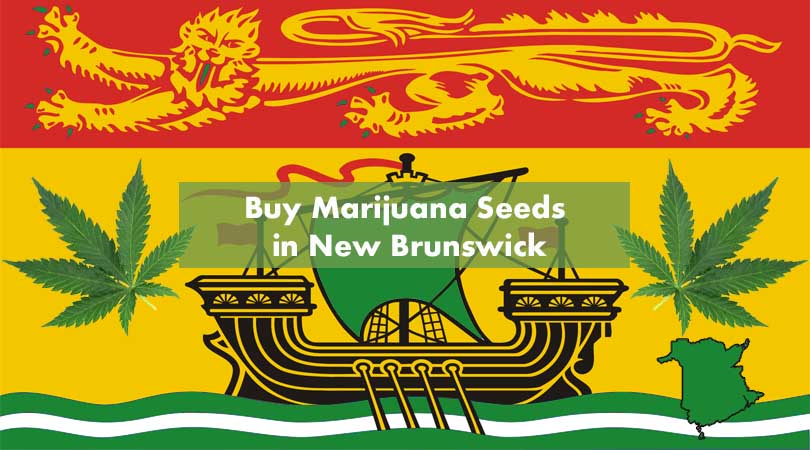 Buy Marijuana Seeds in New Brunswick Cover Photo