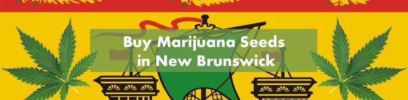 Buy Marijuana Seeds in New Brunswick Featured Image