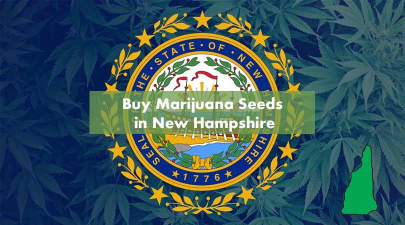 Buy Marijuana Seeds in New Hampshire Cover Photo