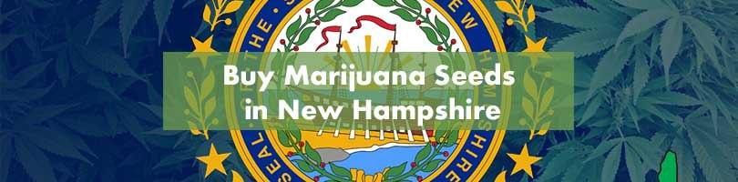 Buy Marijuana Seeds in New Hampshire Featured Image