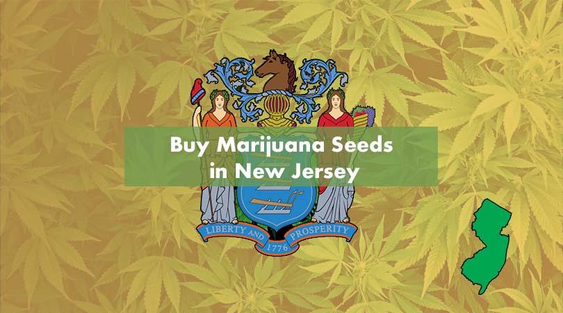 Buy Marijuana Seeds in New Jersey Cover Photo