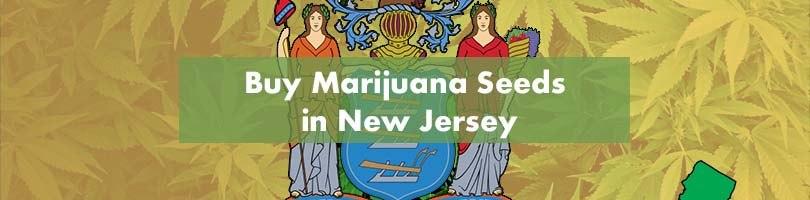 Buy Marijuana Seeds in New Jersey Featured Image