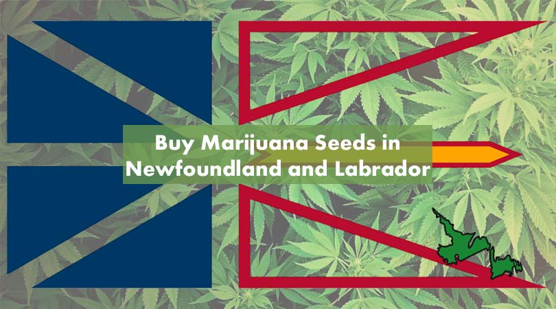 Buy Marijuana Seeds in Newfoundland and Labrador Cover Photo