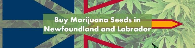Buy Marijuana Seeds in Newfoundland and Labrador Featured Image