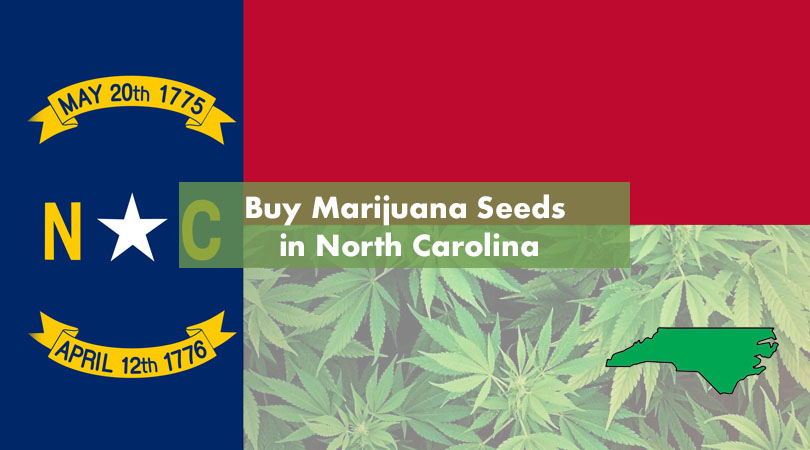 Buy Marijuana Seeds in North Carolina Cover Photo