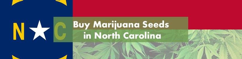 Buy Marijuana Seeds in North Carolina Featured Image