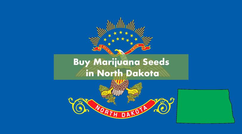 Buy Marijuana Seeds in North Dakota Cover Photo