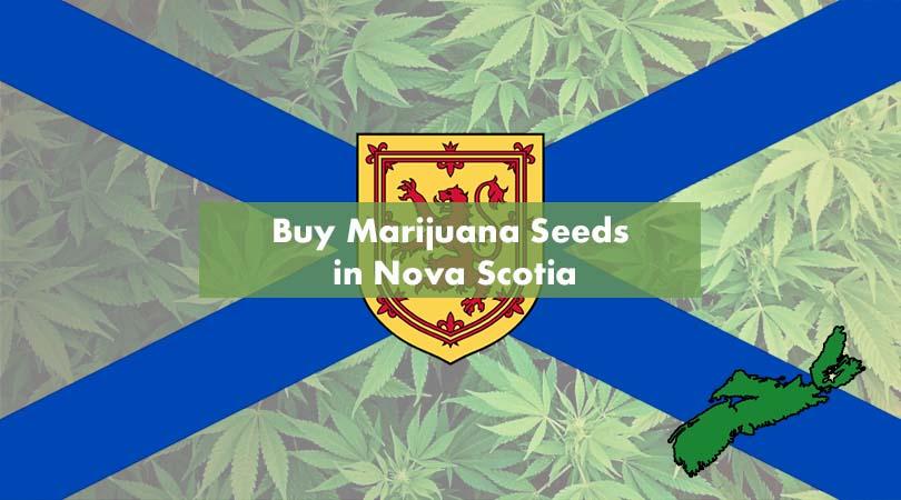 Buy Marijuana Seeds in Nova Scotia Cover Photo