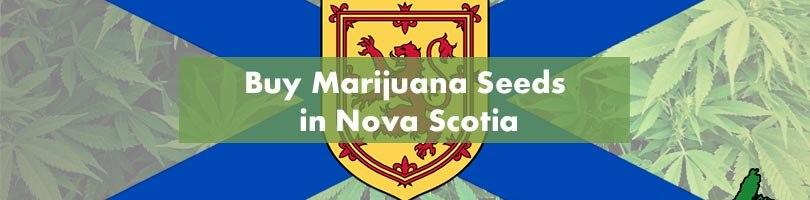 Buy Marijuana Seeds in Nova Scotia Featured Image