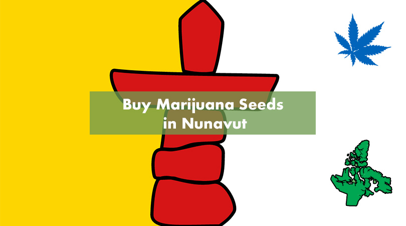 Buy Marijuana Seeds in Nunavut Cover Photo
