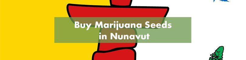 Buy Marijuana Seeds in Nunavut Featured Image