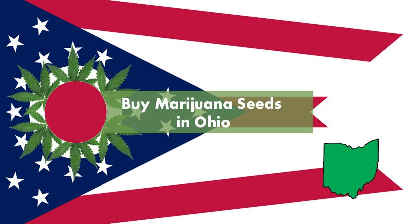 Buy Marijuana Seeds in Ohio Cover Photo