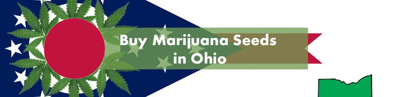 Buy Marijuana Seeds in Ohio Featured Image