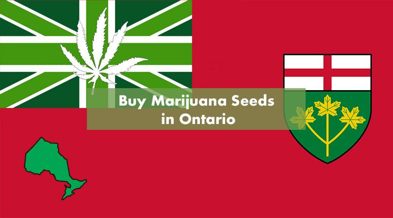 Buy Marijuana Seeds in Ontario Cover Photo