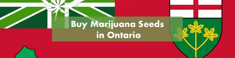 Buy Marijuana Seeds in Ontario Featured Image