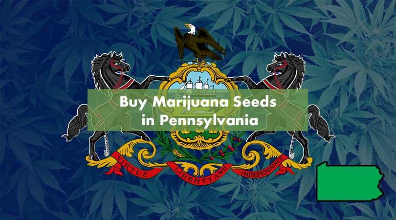 Buy Marijuana Seeds in Pennsylvania Cover Photo