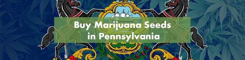 Buy Marijuana Seeds in Pennsylvania Featured Image