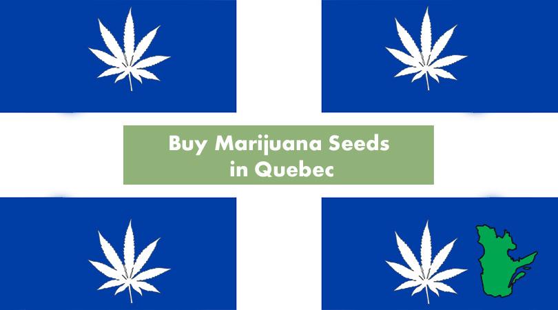 Buy Marijuana Seeds in Quebec Cover Photo
