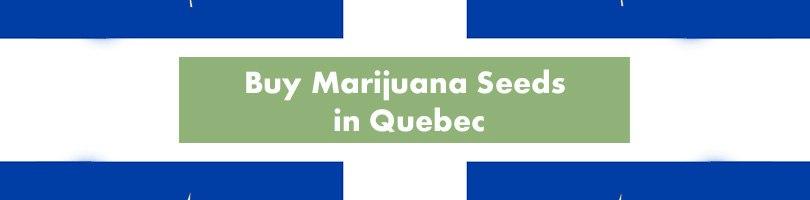 Buy Marijuana Seeds in Quebec Featured Image