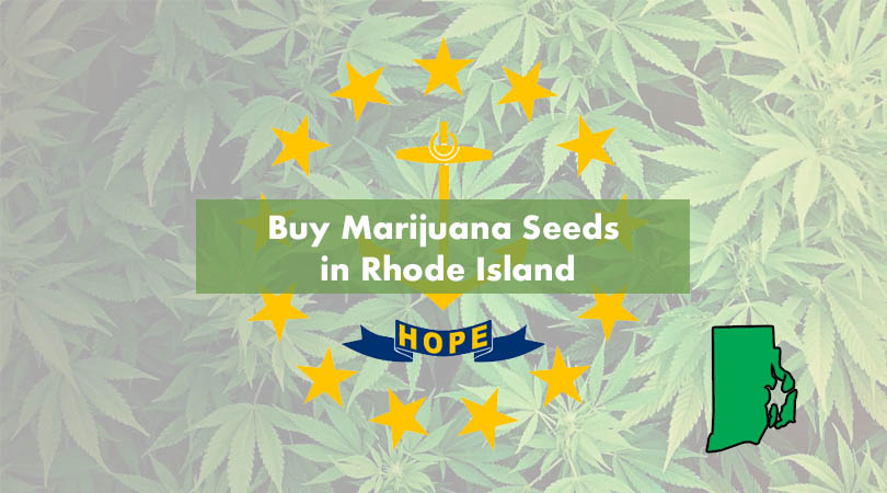Buy Marijuana Seeds in Rhode Island Cover Photo