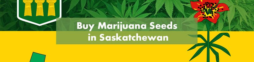 Buy Marijuana Seeds in Saskatchewan Featured Image