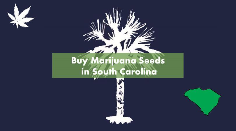 Buy Marijuana Seeds in South Carolina Cover Photo