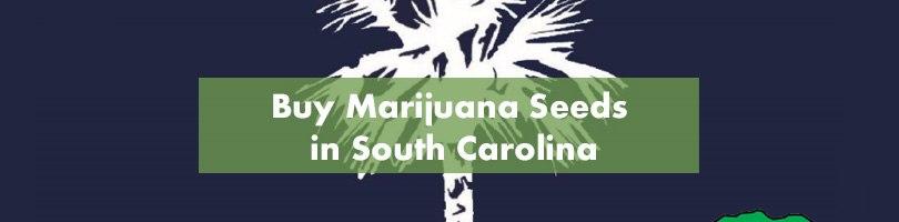 Buy Marijuana Seeds in South Carolina Featured Image