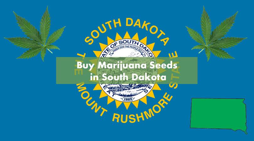 Buy Marijuana Seeds in South Dakota Cover Photo