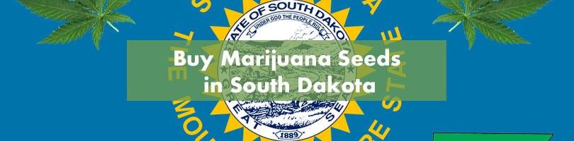 Buy Marijuana Seeds in South Dakota Featured Image