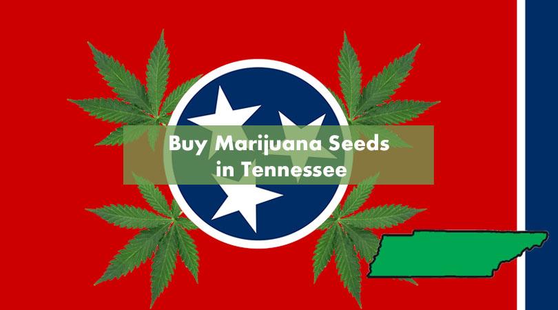 Buy Marijuana Seeds in Tennessee Cover Photo