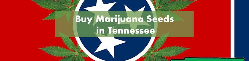 Buy Marijuana Seeds in Tennessee Featured Image