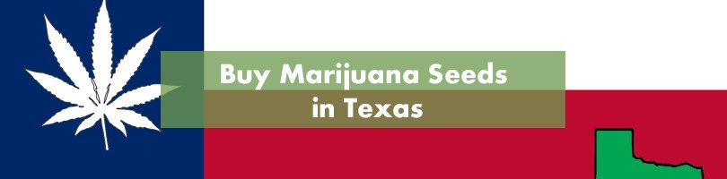 Buy Marijuana Seeds in Texas Featured Image