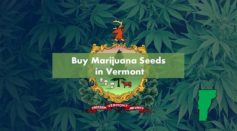 Buy Marijuana Seeds in Vermont Cover Photo